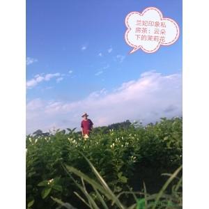 兰妃印象 - 高端定制茶(50克)